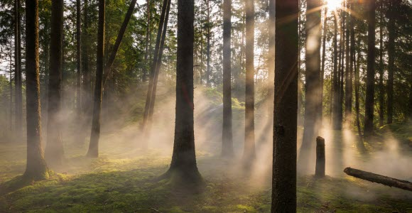 Photo: Foggy forest